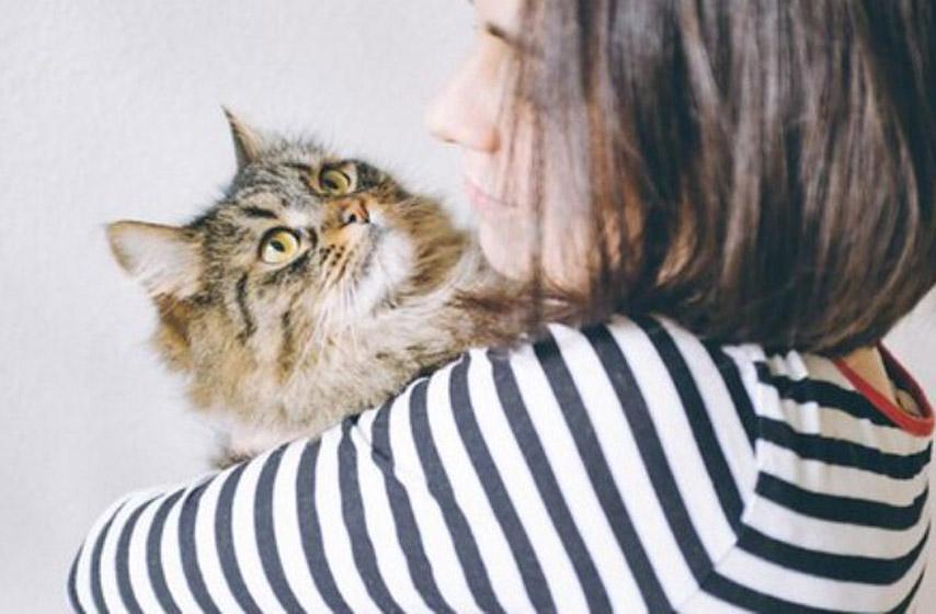 mačka, kućni ljubimci