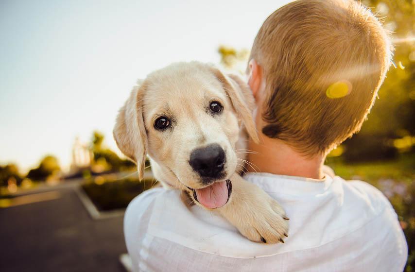 zašto psima sjaje oči u mraku, psi, životinje, magazin, najnovije vesti, mrak, oči