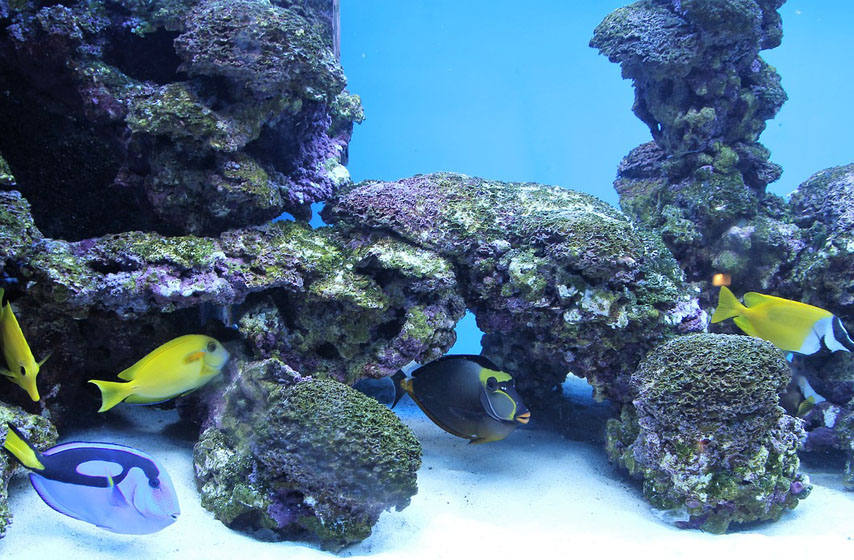 okean, prirodno stanište, životinje, magazin, najnovije vesti, koliko poznajemo okeane