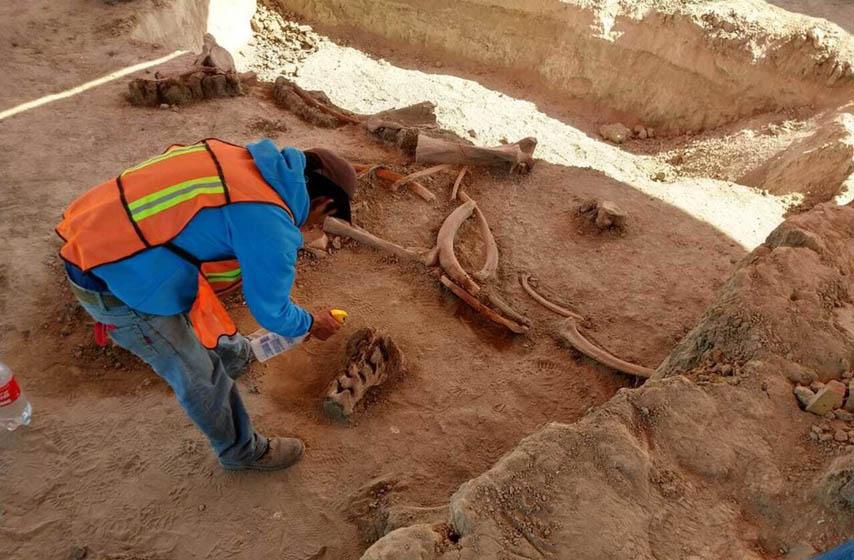 pancevo, beograd, novi sad, vesti, aerodrom, meksiko, kosti mamuta, arheologija