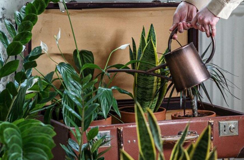 zalivanje biljaka, kako zalivati cvece, pravilno zalivanje cveca