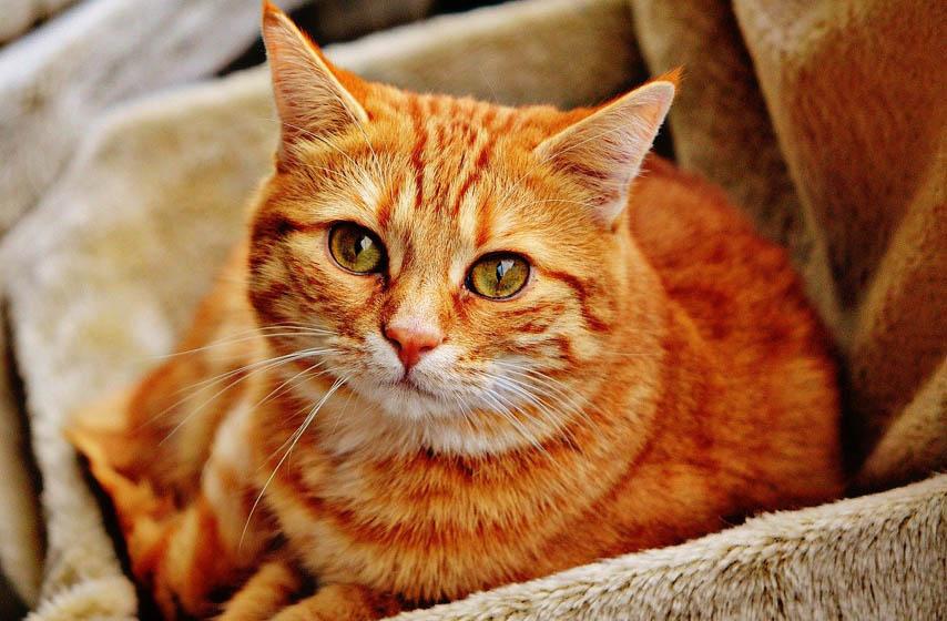 mačka potajno mrzi, mačka, kućni ljubimci