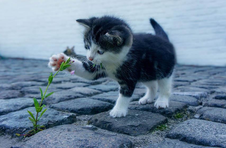 kucni ljubimci, mačka, mačke