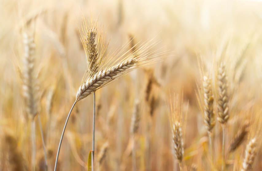 ministarstvo poljoprivrede, branislav nedimovic