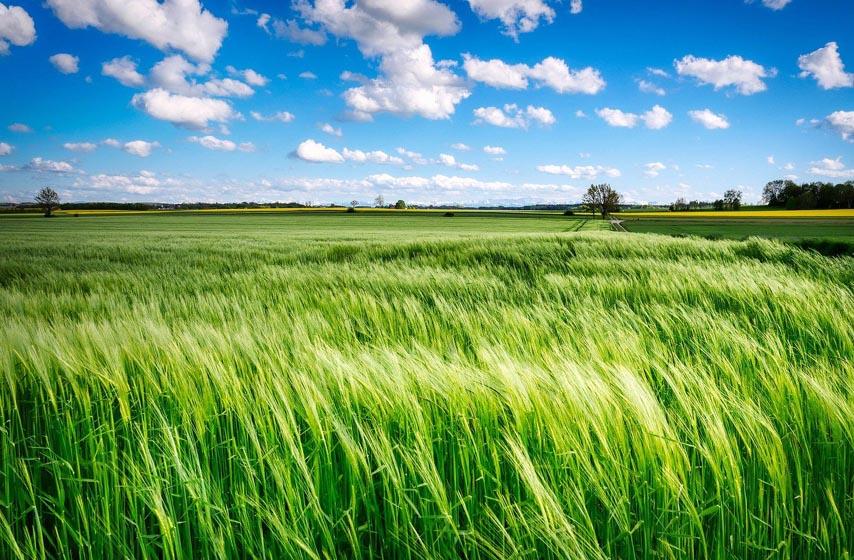 cena poljoprivrednih proizvoda