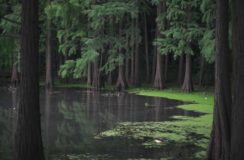 vodstaj, vodostanje, vodostaj reka u srbiji