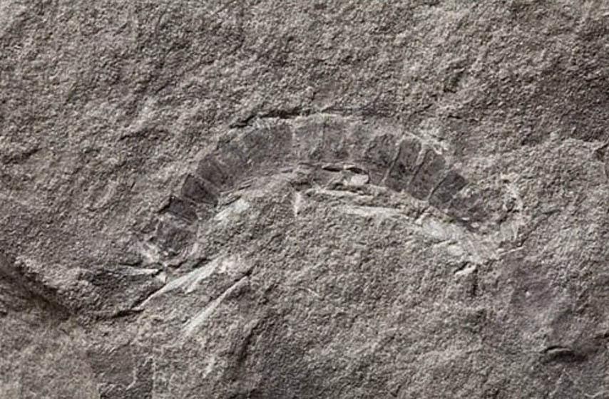 buba, fosil, najstarija buba na svetu, nacionalna geografija, zanimljivosti, najnovije vesti