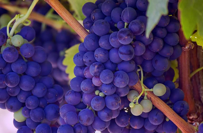 slatko od grožđa, recept, recepti