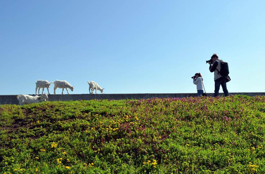 foto safari ivanovo