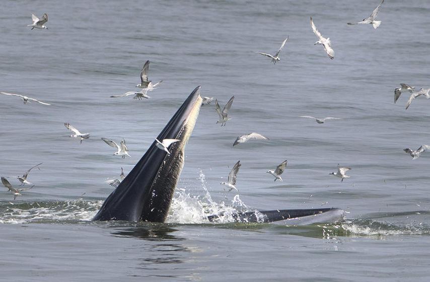 mrtav kit, more izbacilo kita, mire , eseks, vesti iz sveta