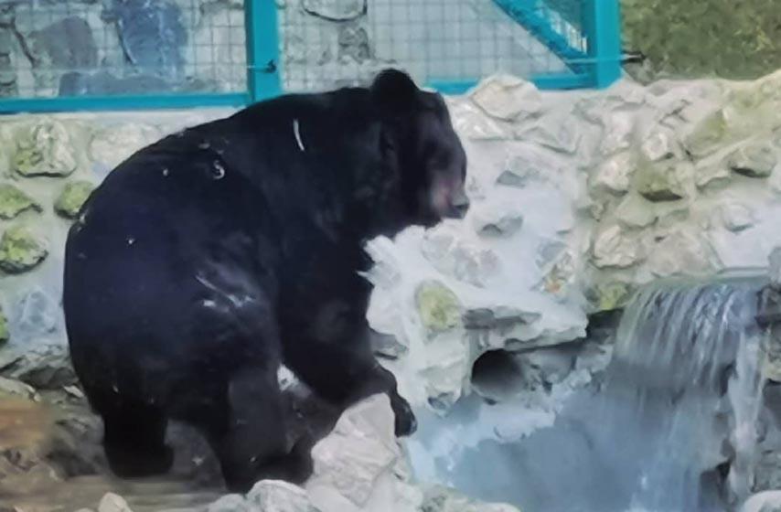 beo zoo vrt, medved uros