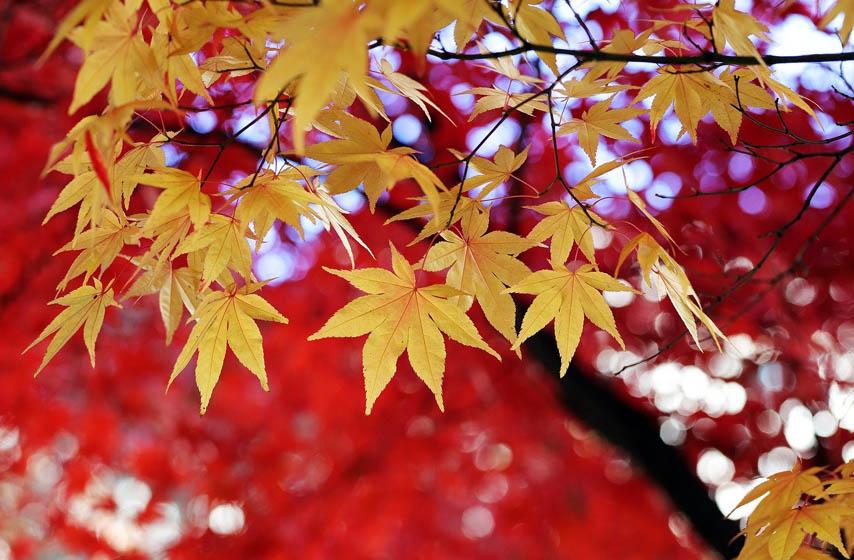 zašto lišće u jesen menja boju