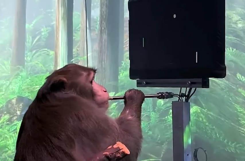 majmun odigrao video igru