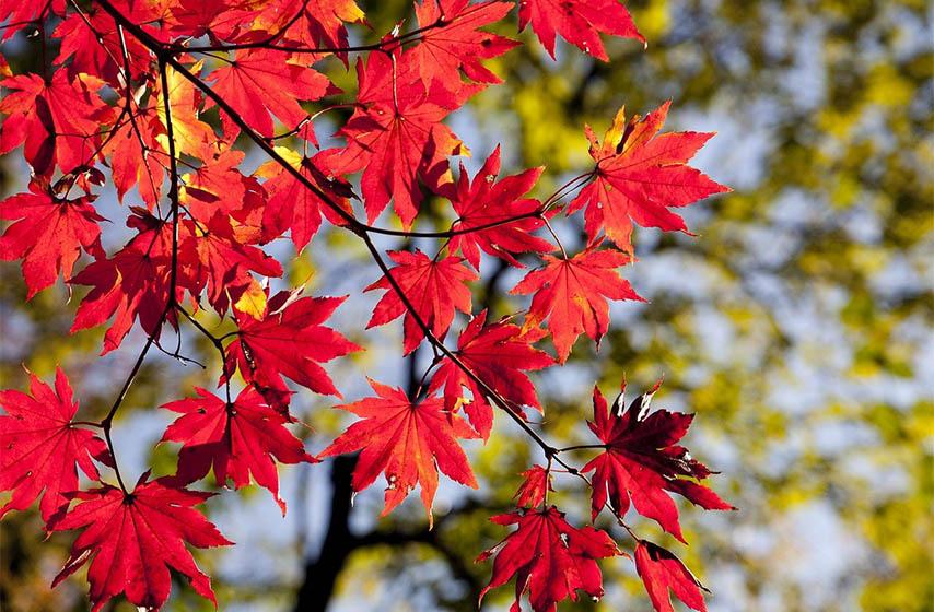 astronomsko drustvo rudjer boskovic, pocinje jesen