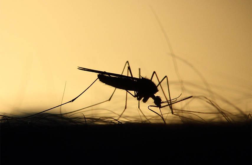 lecenje od malarije