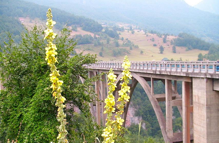 samoubistvo, samoubistva u crnoj gori, crna gora