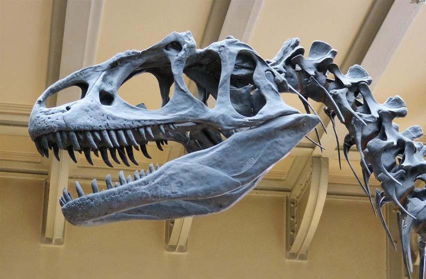 nove vrste dinosaurusa, kina