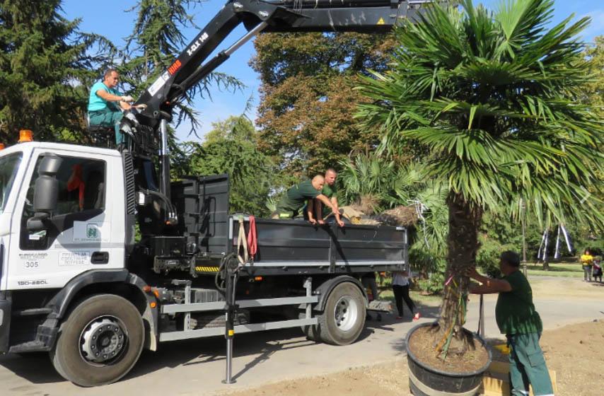 zasađene palme na kalemegdanu