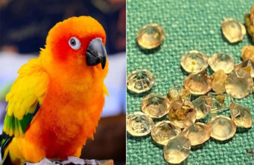 papagaj pojeo dijamante