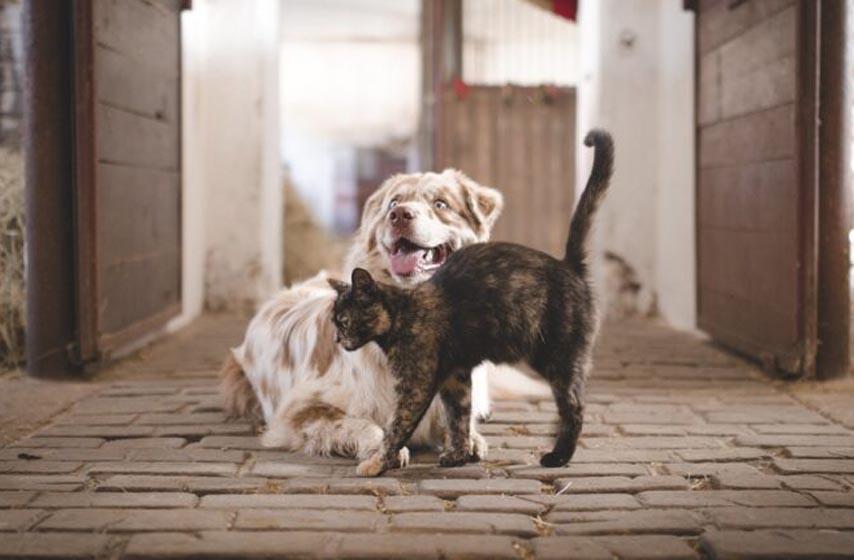 koja zivotinja je popularnija u svetu, pas ili macka