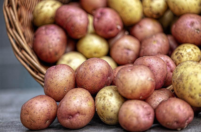 rod krompira u srbiji
