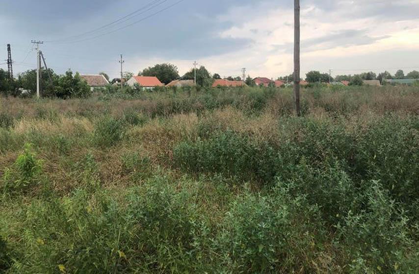 Pančevo, Topola, visoka trava, JKP