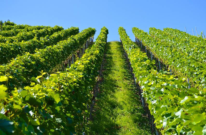vinogradi, krediti za vinogradare