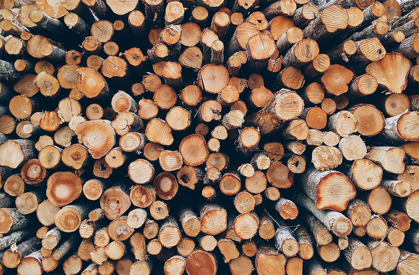 seca drveca, srbijiasume